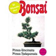 El Mundo del Bonsai. Pinus Uncinata y Pinus Halepensis